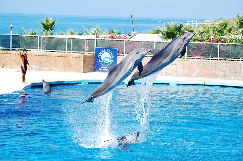 Meine Delfin Show